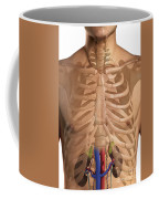 The Renal System Coffee Mug