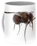 Tsetse Fly Coffee Mug