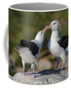 Black-browed Albatross Coffee Mug