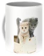Scottish Fold Bleu Coffee Mug