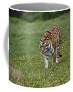 Siberian Tiger, China Coffee Mug