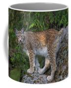 150112p328 Coffee Mug