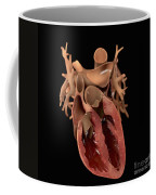 Heart Anatomy Coffee Mug