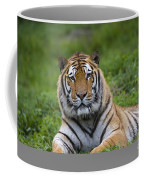 Siberian Tiger, China Coffee Mug