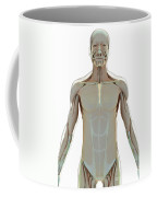 The Muscle System Coffee Mug