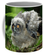 Hibou Moyen Duc Asio Otus Coffee Mug