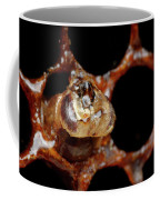 A Honeybee Hive After Colony Collapse Coffee Mug