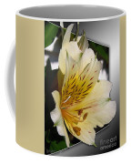 Alstroemeria Named Marilene Staprilene Coffee Mug
