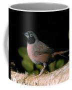 Amarante Vineux Lagonosticta Vinacea Coffee Mug