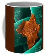 Amoeba Crawling On Nylon Mesh, Sem Coffee Mug by David M. Phillips