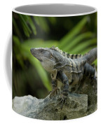 An Iguana Sunbathes In The Ancient Coffee Mug