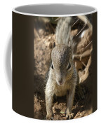 Baby Rock Squirrel Coffee Mug