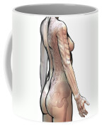 Bones Of The Upper Body Female Coffee Mug