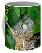 Broad-billed Hummingbird And Young Coffee Mug