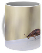 Broad-nosed Weevil - Polydrusus Mollis Coffee Mug