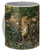 Brown Thrasher Coffee Mug