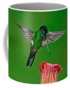 Buff-winged Starfrontlet Coffee Mug
