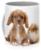 Cavalier King Charles Spaniel Pup Coffee Mug