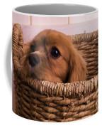 Cavalier King Charles Spaniel Puppy In Basket Coffee Mug