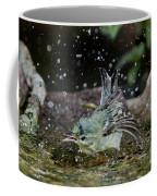 Cerulean Warbler Coffee Mug