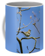 Chipping Sparrow Perched In A Tree Coffee Mug