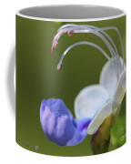 Clerodendrum Ugandense Or Blue Butterfly Bush Coffee Mug