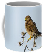 Common Kestrel Falco Tinnunculus Coffee Mug