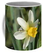 Cyclamineus Daffodil Named Jack Snipe Coffee Mug