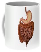 Digestive System Coffee Mug