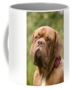 Dogue De Bordeaux Coffee Mug
