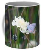 Eastern Tailed Blue Butterfly On Pincushion Flower Coffee Mug