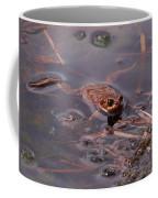 European Common Brown Frog Coffee Mug