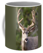 Funny Mule Deer Buck Portrait With Velvet Antler Coffee Mug