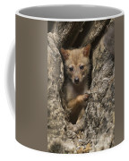 Golden Jackal Canis Aureus Cubs Coffee Mug