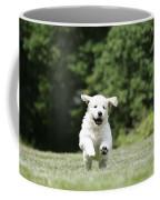 Golden Retriever Puppy Coffee Mug by John Daniels