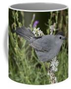 Gray Catbird Coffee Mug
