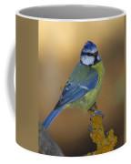 Herrerillo Blue Tit Coffee Mug
