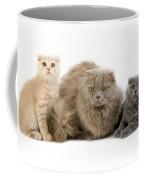 Highland Fold Lilac Self Coffee Mug