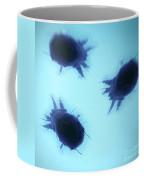 House Dust Mites Coffee Mug