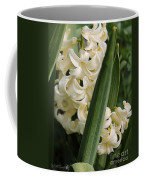 Hyacinth Named City Of Haarlem Coffee Mug