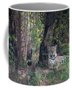 Jaguar Panthera Onca, Pantanal Coffee Mug