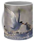 Least Tern Feeding It's Young Coffee Mug