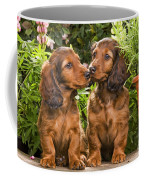 Long-haired Dachshunds Coffee Mug