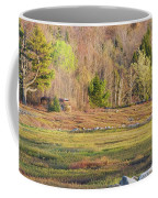 Maine Blueberry Field In Spring Coffee Mug by Keith Webber Jr