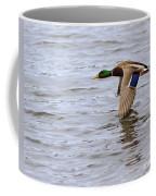 Mallard Duck In Flight Coffee Mug