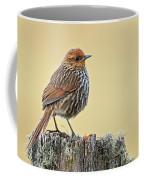 Many-striped Canastero Coffee Mug
