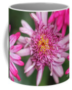 Marguerite Daisy Named Summer Song Rose Coffee Mug