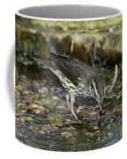 Northern Waterthrush Coffee Mug