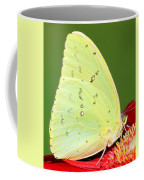 Orange Barred Sulfur Butterfly Coffee Mug