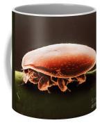Oribatid Mite Coffee Mug